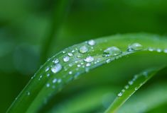 Dew drop. Green grass with dew drops closeup. Natural summer background stock image