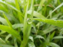 Dew drop Stock Image