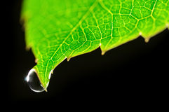 Dew drop on green leaf Royalty Free Stock Images