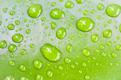 Dew drop on green leaf Royalty Free Stock Photos