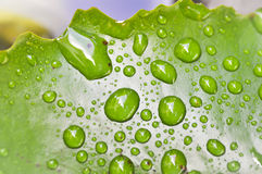 Dew drop on green  leaf Stock Photography
