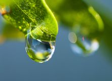 Dew Drop on Leaf Stock Photography