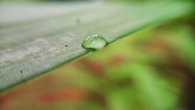 Dew drop on leaf Royalty Free Stock Photos