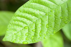 Dew drop on leaf Royalty Free Stock Images