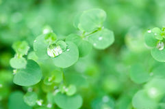 Dew drop and  leaf background Stock Images