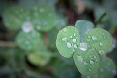 Dew drop on leaf. Dew drop on green leaf Stock Images