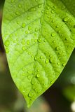 Dew drop on leaf Stock Images