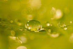 Dew drop on leaf Stock Photo