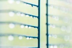 Dew drop. On macro close Royalty Free Stock Photos