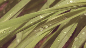 Dew Drop on Narrow Leaf. Shallow Depth of Field Split Toning Nature Macro Photography Royalty Free Stock Photos