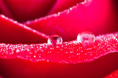 Dew drop Stock Images