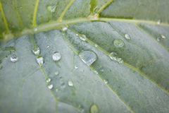 Dew drop is on the sheet plant Royalty Free Stock Photo