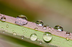 Dew Droplets on a blade of grass stock photography