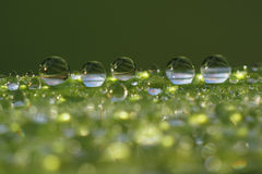 Dew droplets on grass blade - macro. Dew droplets on grass blade, macro, background, desktop wallpaper Royalty Free Stock Photo
