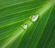 Dew droplets Royalty Free Stock Photo