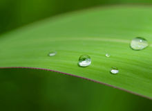 Dew droplets on green leaves Stock Images