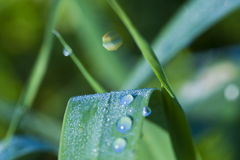 Dew drops. Morning dew drops on green grass Royalty Free Stock Photography