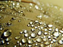 Dew Drops. A Macro shot of water droplets on a leaf Stock Photo