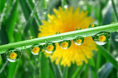 Dew drops. Fresh grass with dew drops close up Stock Photos