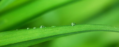 Dew drops Stock Photos