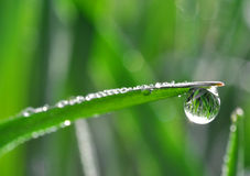 Dew drops Royalty Free Stock Image