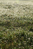 Dew drops. In the grass during early morning Royalty Free Stock Photos