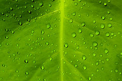 Dew drops. A green leaf with dewdrops on it in the morning Royalty Free Stock Images