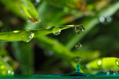 Free Dew Drops Royalty Free Stock Image - 76052256