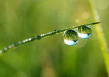 Dew drops. Fresh grass with dew drops close up Royalty Free Stock Photography