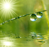Dew drops. Fresh grass with dew drops close up Royalty Free Stock Photos