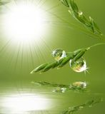 Dew drops above water level. Fresh grass with dew drops above water level - close up Stock Photography
