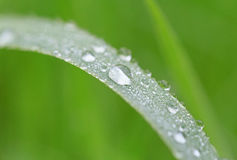 Dew drops on blade Stock Image