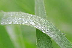 Dew drops on blade Royalty Free Stock Images