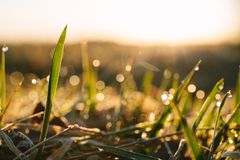 Dew drops on blades of fresh grass, morning rays of sun. Copy space for text stock images