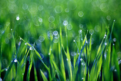 Dew drops on blades of grass Royalty Free Stock Photos