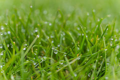 Dew drops on bright green grass with sun flare Stock Photo