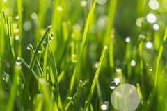 Dew drops on bright green grass with sun flare Stock Images
