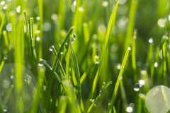 Dew drops on bright green grass with sun flare Royalty Free Stock Photos