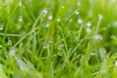 Dew drops on bright green grass with sun flare Stock Photography