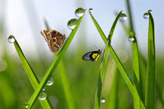 Dew drops and butterflies Stock Photography