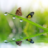 Dew drops and butterflies Royalty Free Stock Photos