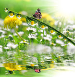 Dew drops and butterfly. Fresh grass with dew drops and butterfly Royalty Free Stock Photos