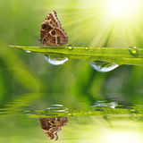 Dew drops and butterfly Royalty Free Stock Image