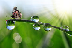 Dew drops and butterfly Stock Photos