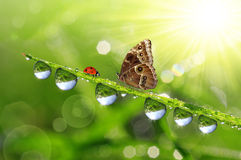 Dew drops and butterfly Stock Images