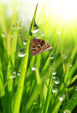 Dew drops and butterfly Royalty Free Stock Images