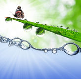 Dew drops and butterfly. Grass with dew drops and butterfly above the water level Royalty Free Stock Images