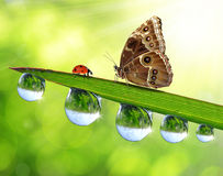 Dew drops, butterfly and ladybird. Fresh green grass with dew drops, butterfly and ladybird Stock Photography
