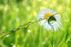 Dew drops close up. Fresh grass with dew drops close up Royalty Free Stock Photos