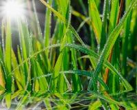 Dew drops close up Stock Image